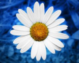 daisy background 404