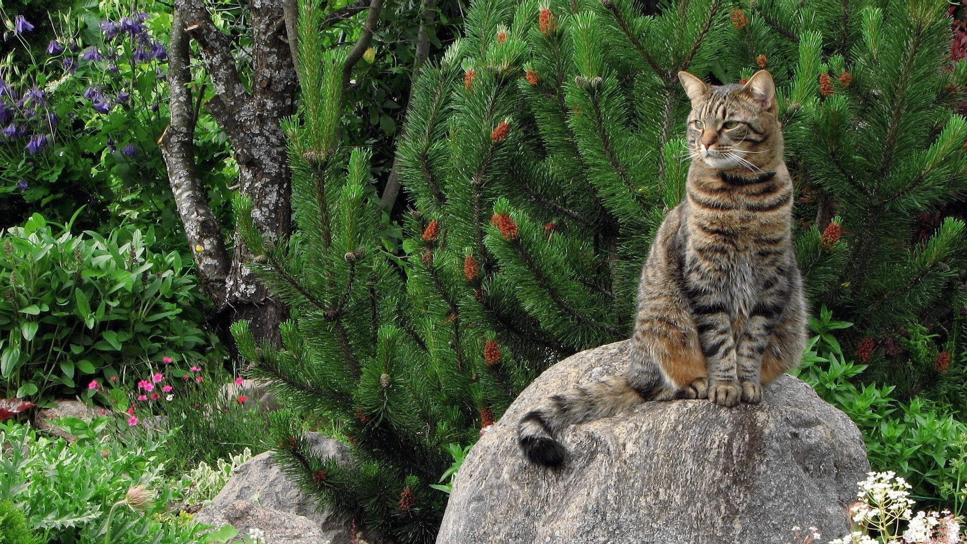 1 Wild Cat HD Wallpapers 1929 :: Wild Cat Hd Wallpapers