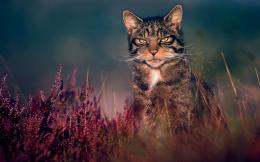 wallpaper of wild cat big wild cat desktop wallpaper big wild cat 627