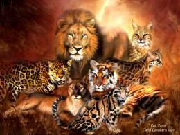 Wild Animals Big Cats 116