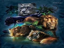 Wild Cats Tiger Animal Lion hd wallpaper #1577893 841