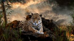 Download Wild Cat Leopard Tiger Desktop HD WallpaperSearch more 1634