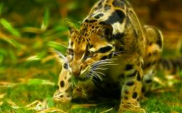 Fractal ocelot wild cat animal HD Wallpaper 418