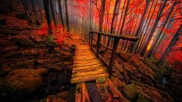 Wooden Bridge Desktop Wallpaper 1967