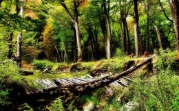 Wooden Bridge Desktop Wallpaper 1703