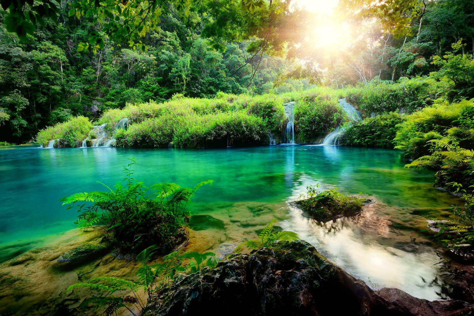 Beautiful nature rays shine trees forest wallpaper 533
