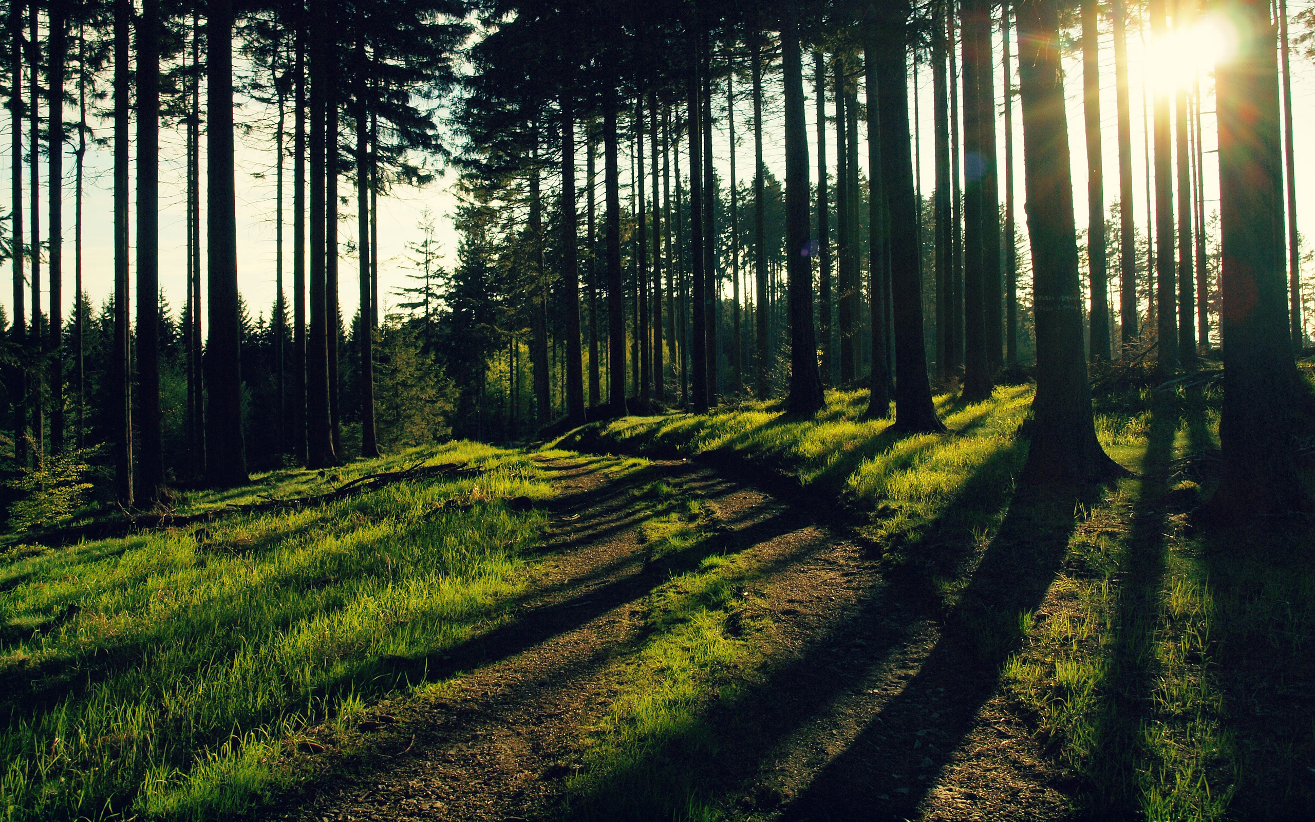 forest nature forest trees evening light rays the sun grass herbs 1238