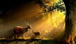 Beautiful Rays Animals Buck 1527