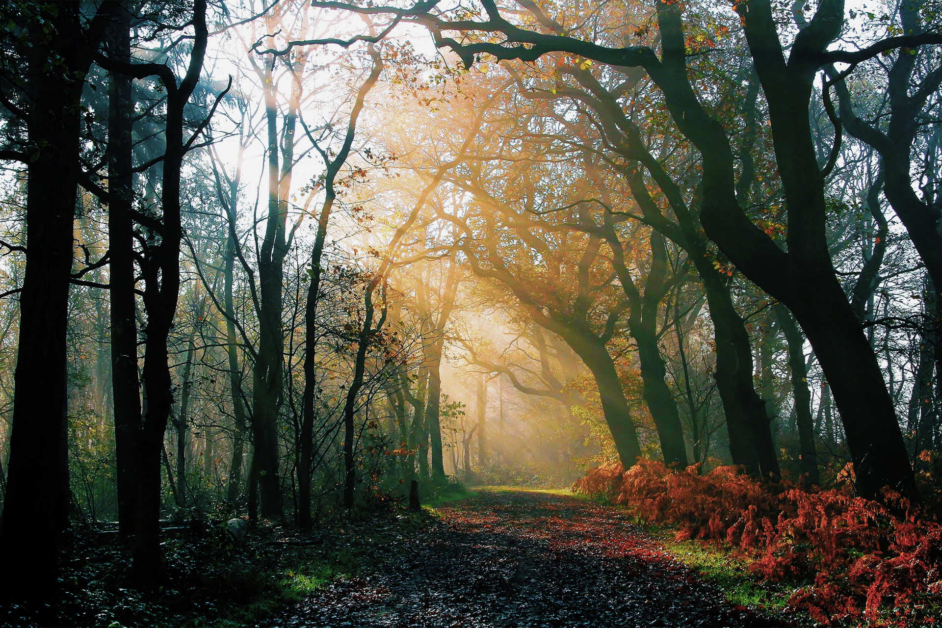 nature forest night autumn after the rain the road the light rays jpg 1524