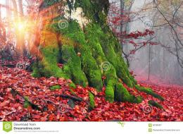 bright rays early morning forest heavy storm rain forest fog lights 1207
