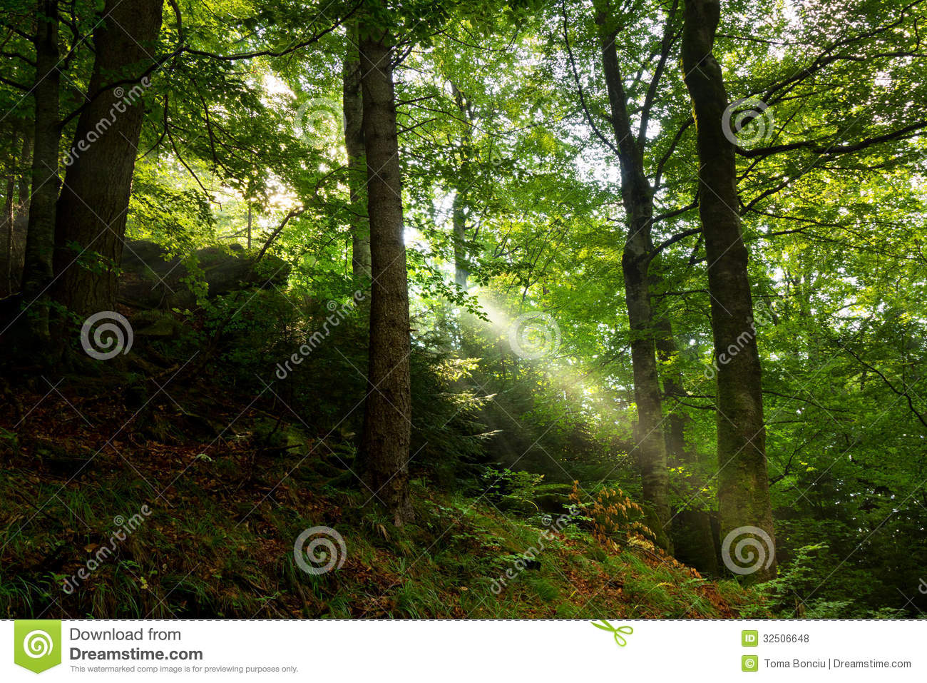 Sun Rays Coming Through The Trees Royalty Free Stock PhotosImage 613