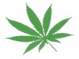 Pot Leaf Sticker 437