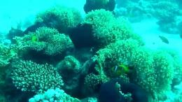 Adventure coral reef under the sea of EgyptYouTube 1603