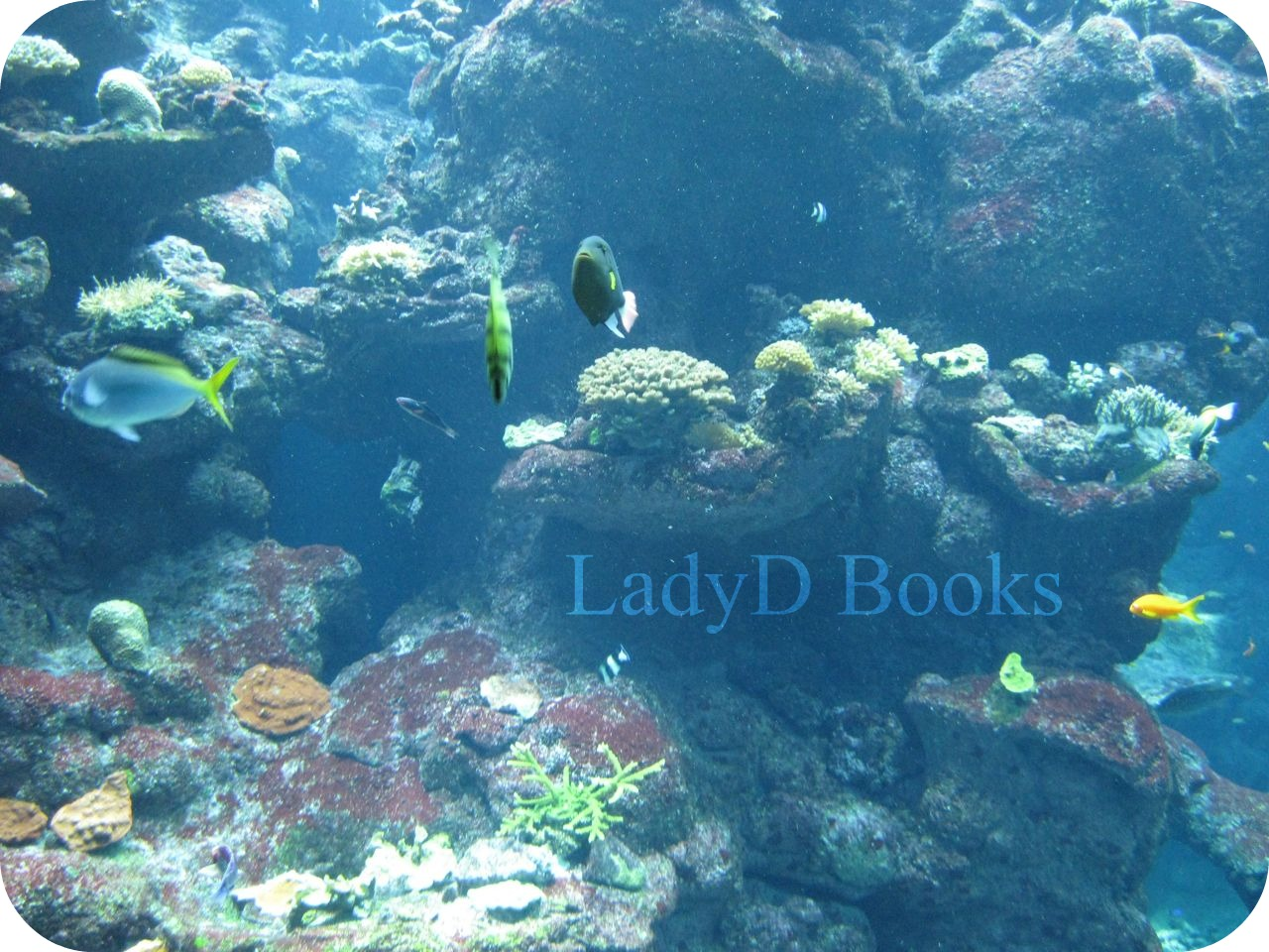 LadyD Books: Wordless Wednesday: Under The Sea, Coral Reef Adventure 310