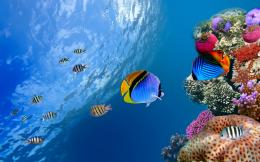 Underwater coral fish Wallpapers Pictures Photos Images 210