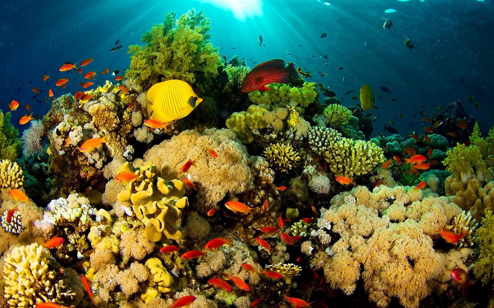 Genesis Nature Blog: Coral Reef Habitats 184