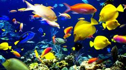 fishes color underwater sea ocean coral reef wallpaper background 1999