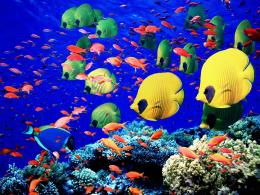 The Northern Red Sea8 Underwater Wonders→ Travel 1743