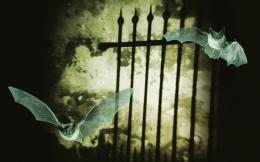 Bats by a spooky gate wallpaper #7219 1382