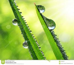 Fresh grass with dew drops close up 128