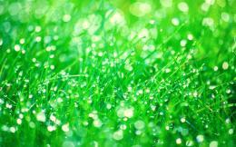 Pictures, grass, herbs, drops, water, dew, close up wallpapers 185