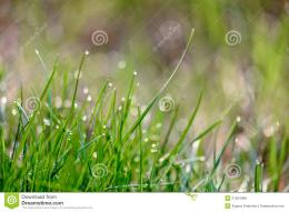 Dew Drops On Green Grass Royalty Free Stock ImagesImage: 31024489 1066
