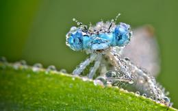 Dragonfly Water Drops Wallpapers Pictures Photos Images 891