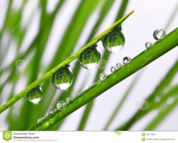 Fresh grass with dew drops close up 364