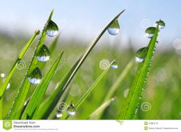 Fresh grass with dew drops close up 1272