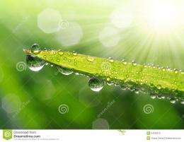Fresh grass with dew drops close up 122