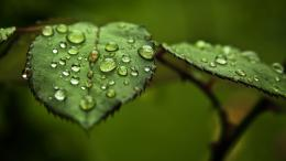 Drops, water, leaves, herbs, close up, the dew wallpaper 1259