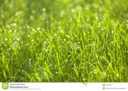 Dew Drops On Green GraasClose up Royalty Free Stock Photography 1945