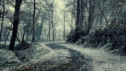 Name: 24236 path through the snowy forest 1920x1080 nature wallpaper 132