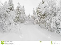 The Path In A Snowy Winter Forest Royalty Free Stock PhotosImage 1025