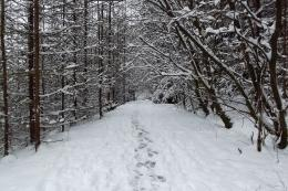 Snowy Path through forestby Grimmotron on DeviantArt 336