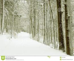 Forest in winter with frost covered trees and fresh snow on the ground 674