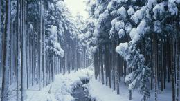 Download Snow Covered Forest Path High quality wallpaper 210