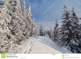 snow drifts and a footpath in a mountain forestForest after a snow 1107
