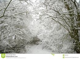 Snow covered Forest Path Royalty Free Stock ImagesImage: 8090949 447