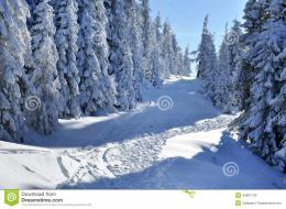 Snowy Path In The Forest Stock PhotoImage: 44951120 227