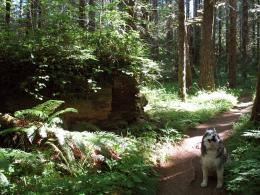 Gales Creek area hikes | Forest Hiker 417