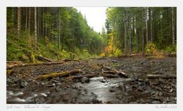 Gales Creek AutumnOregonFM Forums 1160