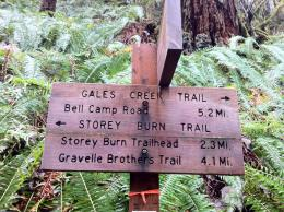 Gales Creek Trail 1235