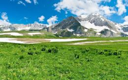 Green meadow and snowy mountains wallpaper 205