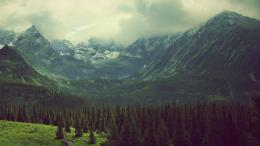 Download Cloud veil covering the green mountains wallpaper 1827
