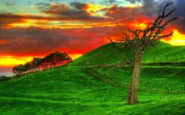 Download Rough tree on green field and fire sky High quality wallpaper 599