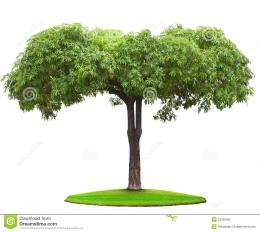 Tree On Green Grass Field Royalty Free Stock PhotoImage: 32336395 651