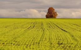 Tree on the green field wallpaper 1082
