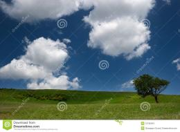 Spring landscapegreen field lonely tree and the blue sky with 905