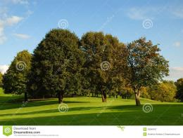 Royalty Free Stock Photography: Green field and trees 1861
